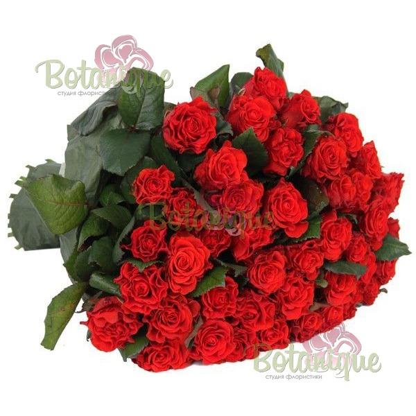 Роза красная Эльторо