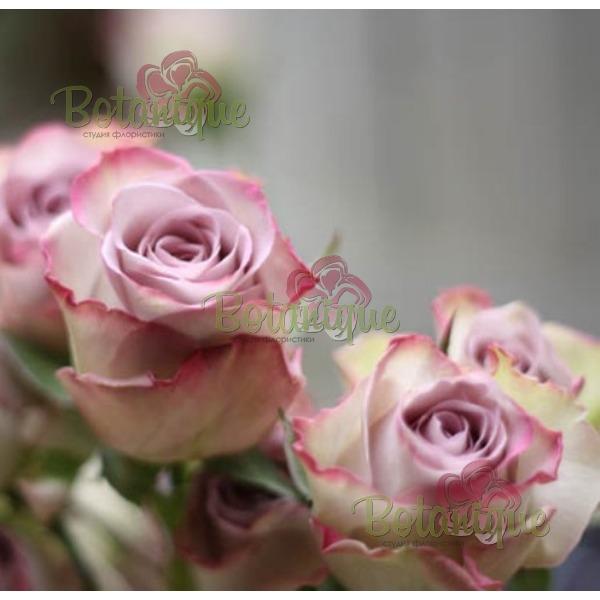 Роза сиреневая Мемори