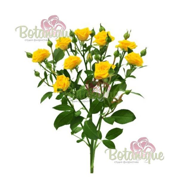 Веточная роза Шанни