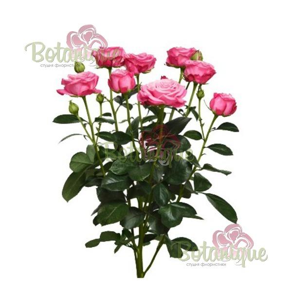 Веточная роза Леди Бомбастик